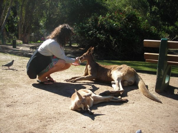 Non solo canguri e koala: i ragni australiani!
